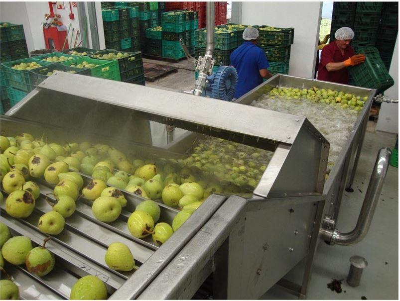 Lignes de transformation de pommes et poires
